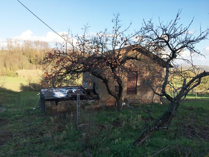 Casaletto agricolo con terreno
