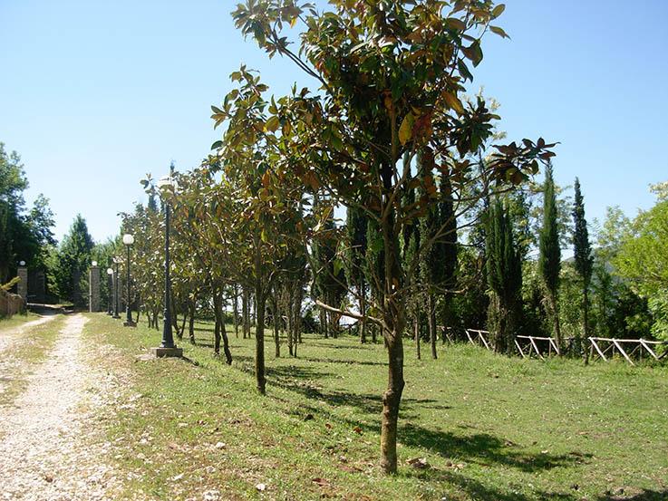 Casale con 11 ettari ca. di terreno